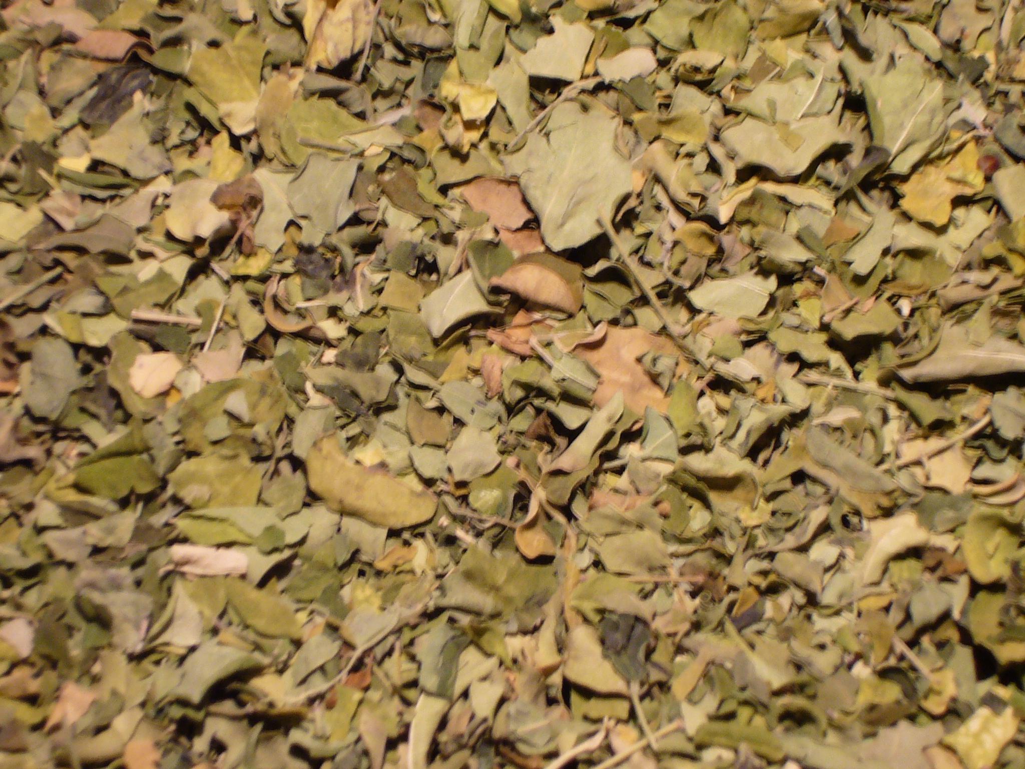 Moringatee Moringablätter geschnitten .  Kräutertee ohne Aroma