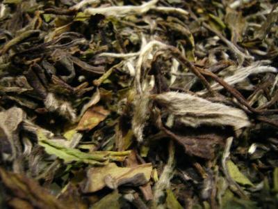 Pai Mu Tan Fujian. Weißer Tee